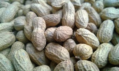 Groundnut Business How to Start-up In Nigeria